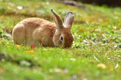 Portrait of the cute bunny in Vienna zoo. Cute bunny eating green grass in Vienna zoo, Austria, October 2017 stock image