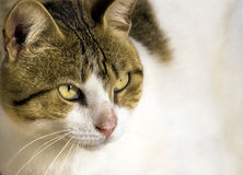 Portrait of cute cat Royalty Free Stock Photography