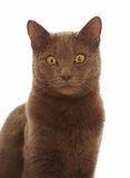 Brown cat Stock Photo