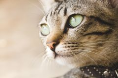 Portrait of cute cat royalty free stock photos