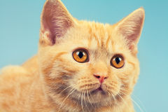 Portrait of cute cat Royalty Free Stock Image