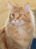 Cute pet cat Stock Photo