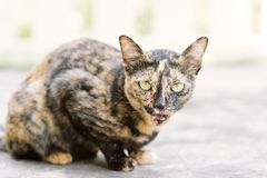 Portrait of cute cat looking at camera. Pets at home Stock Photos