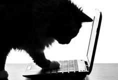Portrait of cute cat master the technology using a netbook Royalty Free Stock Photography