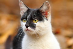 Portrait of cute cat Royalty Free Stock Photo