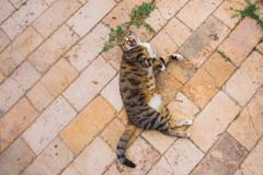 Portrait of cute colorful mongrel cat laying on ground outdoors stock photography