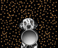Portrait of a cute dalmatian and his food bowl Royalty Free Stock Images