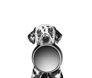 Portrait of a cute dalmatian and his food bowl Royalty Free Stock Photos