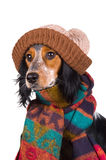 Portrait of cute dog with hat Stock Images