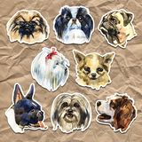 Portrait cute dog set isolated. Watercolor hand-drawn illustration. Popular decorative dog breeds. Greeting card design. stock illustration