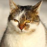 Portrait of cute domestic cat. Outdoor portrait of cute domestic cat on a winter day Stock Photo