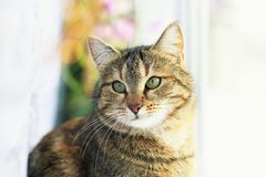 Portrait of cute edgy cat sitting on the window surrounded by bright circles of light and white tulle. Portrait of cute edgy cat sitting on the window surrounded royalty free stock image