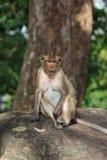 Portrait of cute flirting female monkey Stock Photos