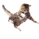 Portrait of a cute flying fluffy kitten Stock Images