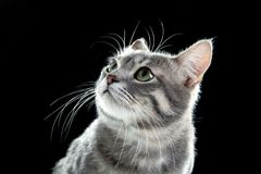Portrait of cute funny cat. On dark background royalty free stock images
