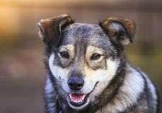 Portrait of cute funny dogs mutts smiling open-mouthed cheerful. In the Sunny garden Royalty Free Stock Photos