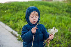 Portrait of a cute funny little boy toddler standing in the forest field meadow with dandelion flowers in hands and blowing them Royalty Free Stock Images