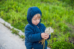 Portrait of a cute funny little boy toddler standing in the forest field meadow with dandelion flowers in hands and blowing them Royalty Free Stock Photo