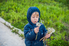 Portrait of a cute funny little boy toddler standing in the forest field meadow with dandelion flowers in hands and blowing them Stock Photo