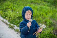 Portrait of a cute funny little boy toddler standing in the forest field meadow with dandelion flowers in hands and blowing them Stock Photography