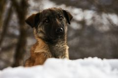 Portrait of cute funny puppy dog sit on snow. Close-up Stock Image
