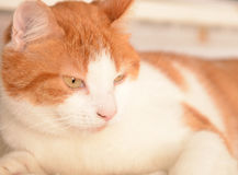 Cute cat Royalty Free Stock Images