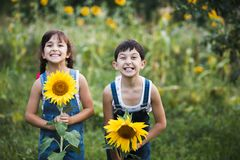 Portrait of cute girls hiding behind sunflowers. On sunny day Royalty Free Stock Photo
