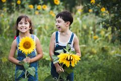 Portrait of cute girls hiding behind sunflowers. On sunny day Royalty Free Stock Image