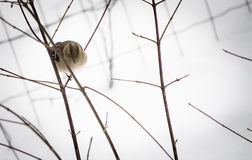 Portrait of cute hungry sparrow not used to cold temperatures and snowy winter, searching for food royalty free stock photo