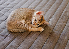Portrait of cute kitten Royalty Free Stock Images