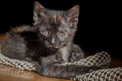 Portrait of a cute kitten Stock Photo