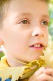 Portrait of a cute little boy. Autumn portrait of a cute little boy with leaves Stock Photography