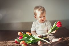 Portrait of a cute little boy who looks at colorful tulips. Sun glare in the frame. Warm colour scheme. Royalty Free Stock Images