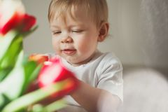 Portrait of a cute little boy who smiles and looks at colorful tulips. Sunny day. Sun glare in the frame. Warm colour scheme. stock photography