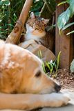 Portrait of a cute little cat and dog Stock Images