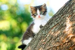 Portrait of a cute little fluffy kitten climbing on a tree branch in the nature Royalty Free Stock Photo
