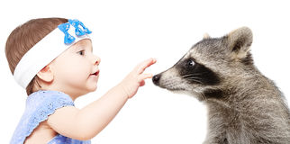 Portrait of a cute little girl and raccoon Stock Photography