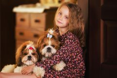 Portrait of a cute little girl with two dogs. Shih tzu royalty free stock image