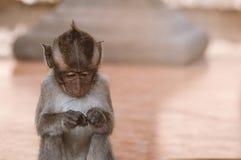 Portrait of  cute little monkey stock images