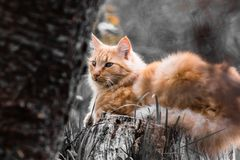 Portrait of cute little orange cat  lying on tree trunk outdoors in selective color black and white in blurred background Stock Photography