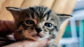 Portrait of cute little sleeping kitten. On man`s hands Stock Image