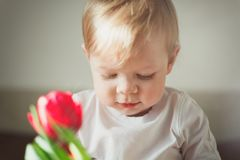 Portrait of a cute little smiling boy. Close up. In the foreground not in focus there is a red Tulip flower and a small glare. Royalty Free Stock Photo