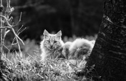 Portrait of cute little vagrant cat isolated lying on tree trunk looking at camera outdoors in black and white in blurred backgrou Royalty Free Stock Photos