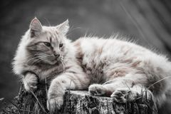 Portrait of cute little vagrant cat  lying on tree trunk outdoors in black and white in blurred background Stock Image