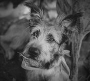 Portrait of a cute mixed breed dog Stock Images
