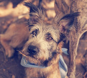 Portrait of a cute mixed breed dog Royalty Free Stock Image