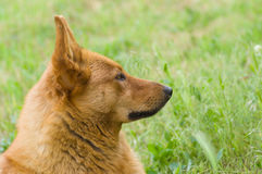 Portrait of cute mixed breed dog in spring grass Royalty Free Stock Images