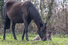 Lovely mare with her newborn foal in the meadow stock photo