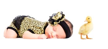 Portrait of cute newborn girl and duckling royalty free stock images