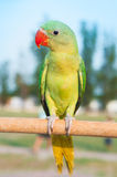 Portrait of cute parrot Stock Photos